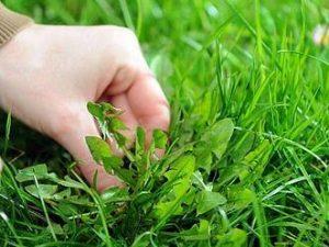 supprimez-les-mauvaises-herbes