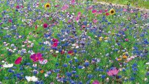 adoptez-la-prairie-fleurie-attitude_4561854