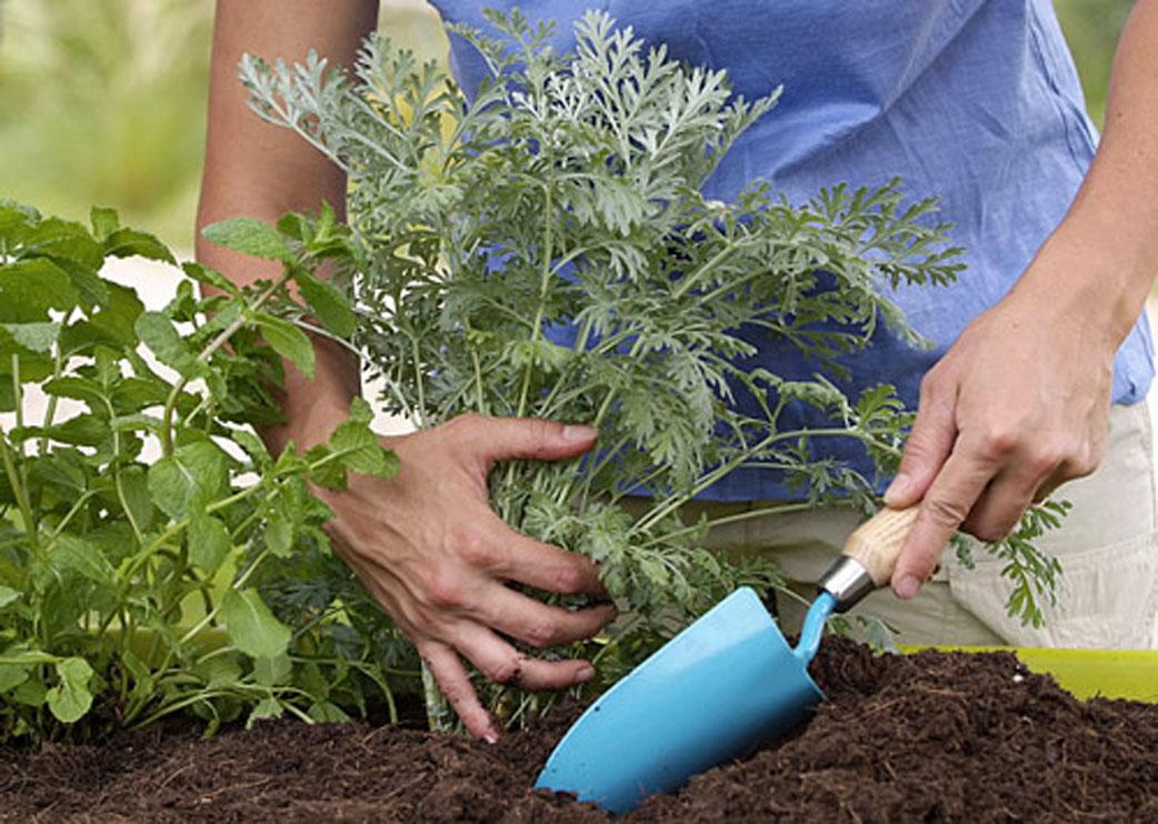 Comment faire fuir les taupes de son jardin maison - Comment faire fuire les taupes dans le jardin ...