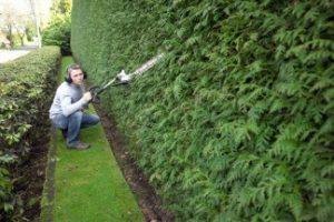 Améliorer le look de son jardin