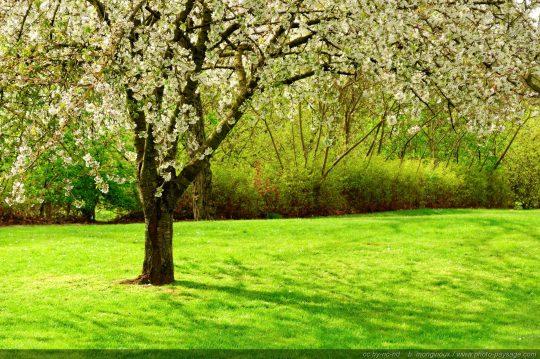 Tout sur les jardins - Comment avoir une belle pelouse ...